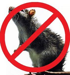 Как избавиться от мышей в квартире