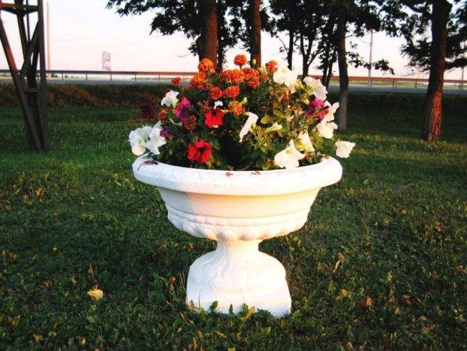 Изготовление вазонов из бетона своими руками: идеальное обрамление для уличных цветов