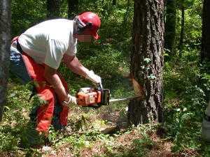 Как правильно спилить дерево бензопилой и какую модель использовать