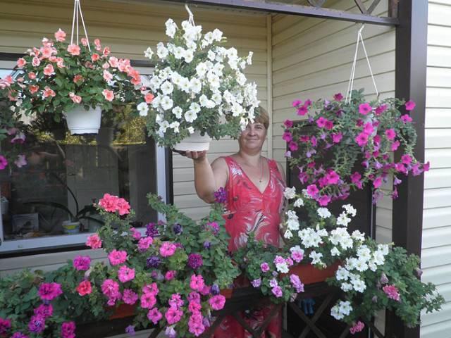 Петуния домашняя - фото, выращивание в кашпо, как сохранить зимой, описание черенкования