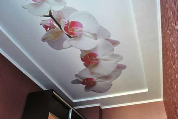 Матовые натяжные потолки: 100+ фото, современные идеи оформления