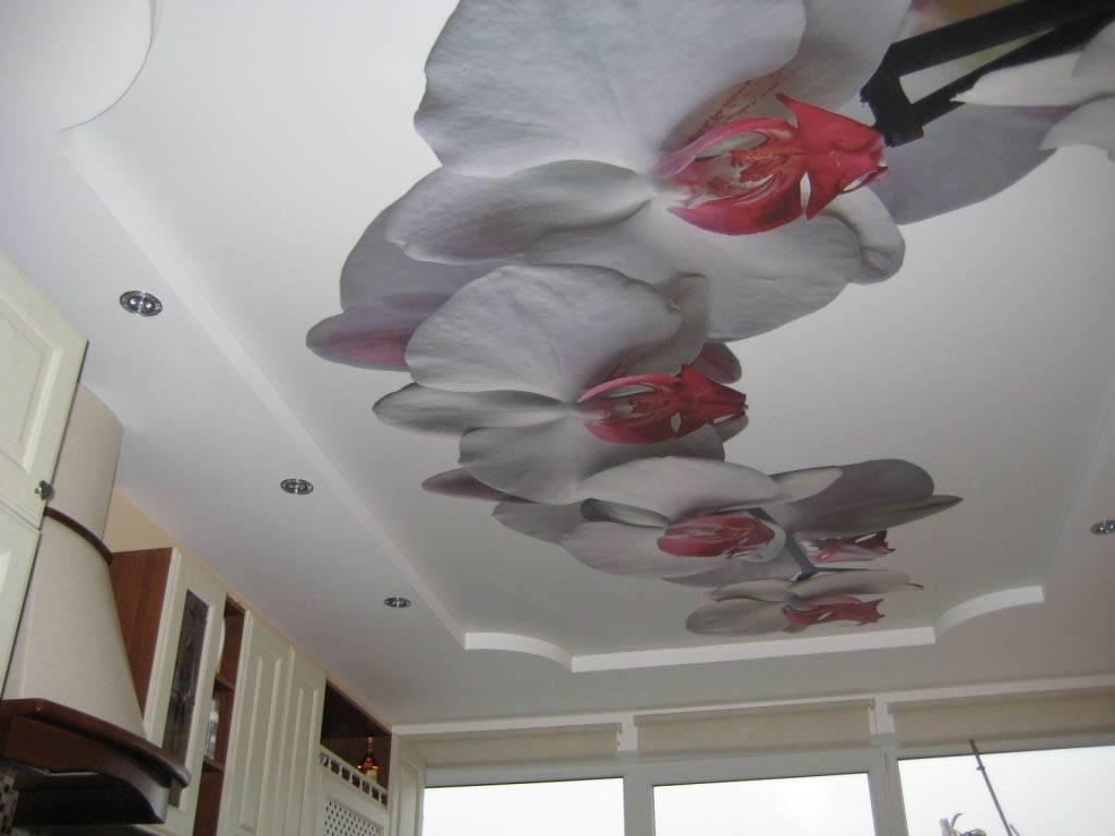 Натяжной потолок с орхидеей (17 фото): особенности и красивые сочетания