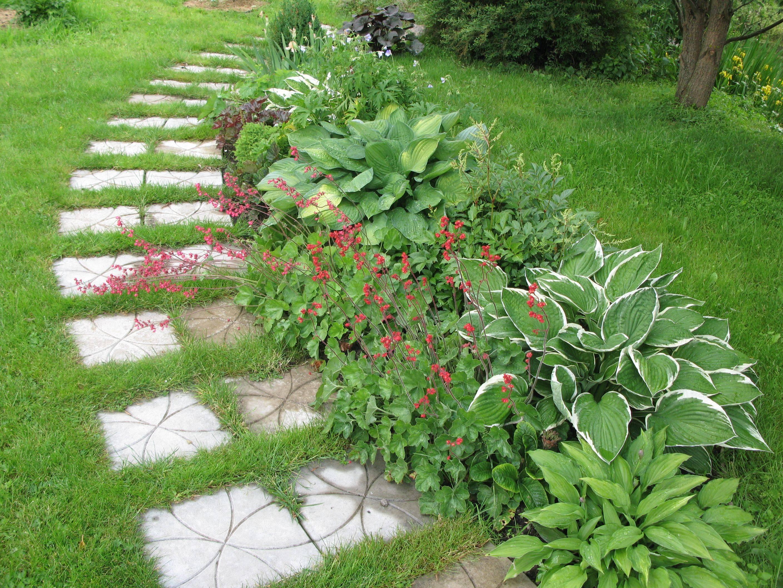 Хосты в саду — ландшафтные хитрости