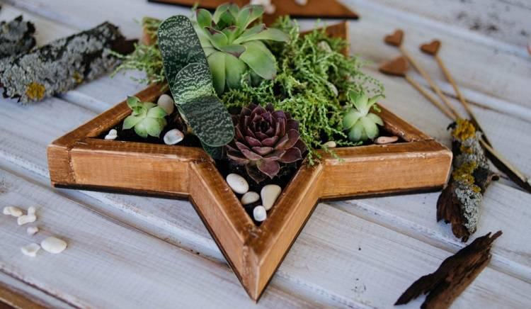 Флорариум с суккулентами (33 фото): как посадить цветы в аквариум из стекла? как сделать садик из суккулентов в стеклянной вазе своими руками?