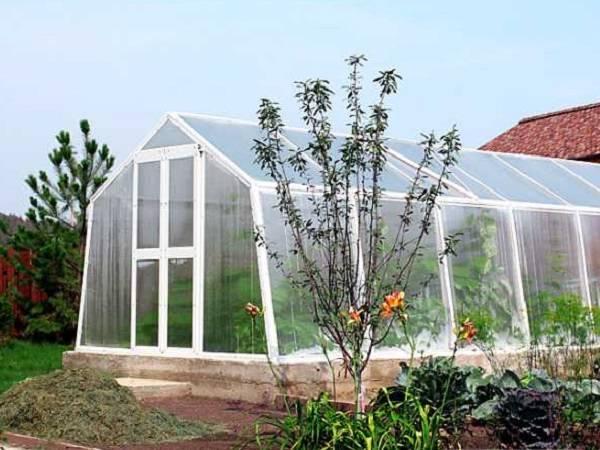 Теплицы glass house: преимущества модели «березка», отзывы