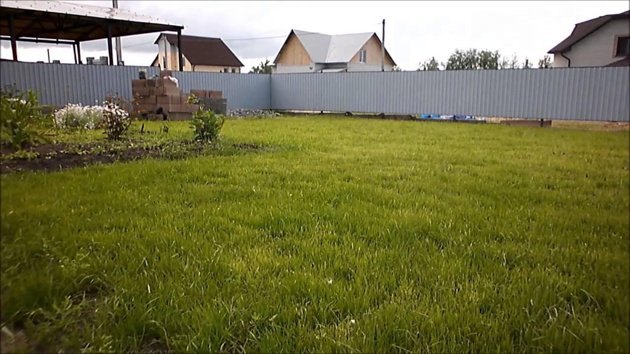 Какой рулонный газон лучше выбрать для дачи: узнайте важные нюансы выбора, прежде чем купить!
