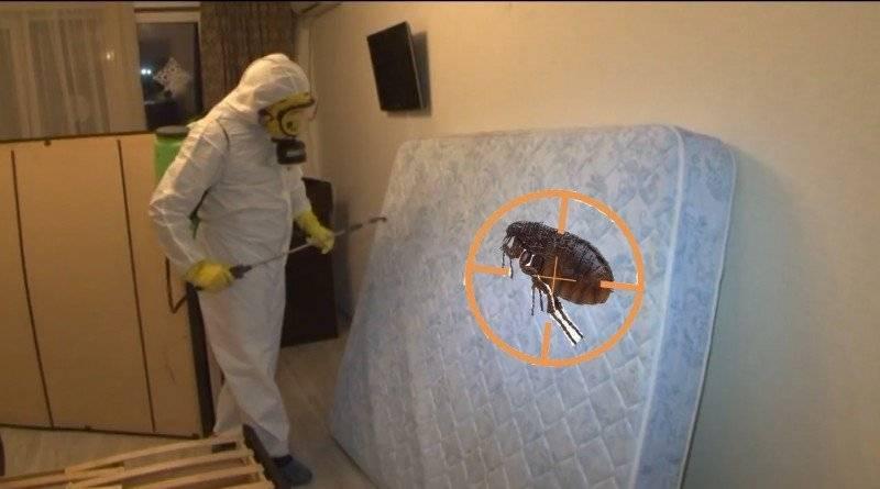 Как избавиться от блох в доме быстро: виды и причины появления