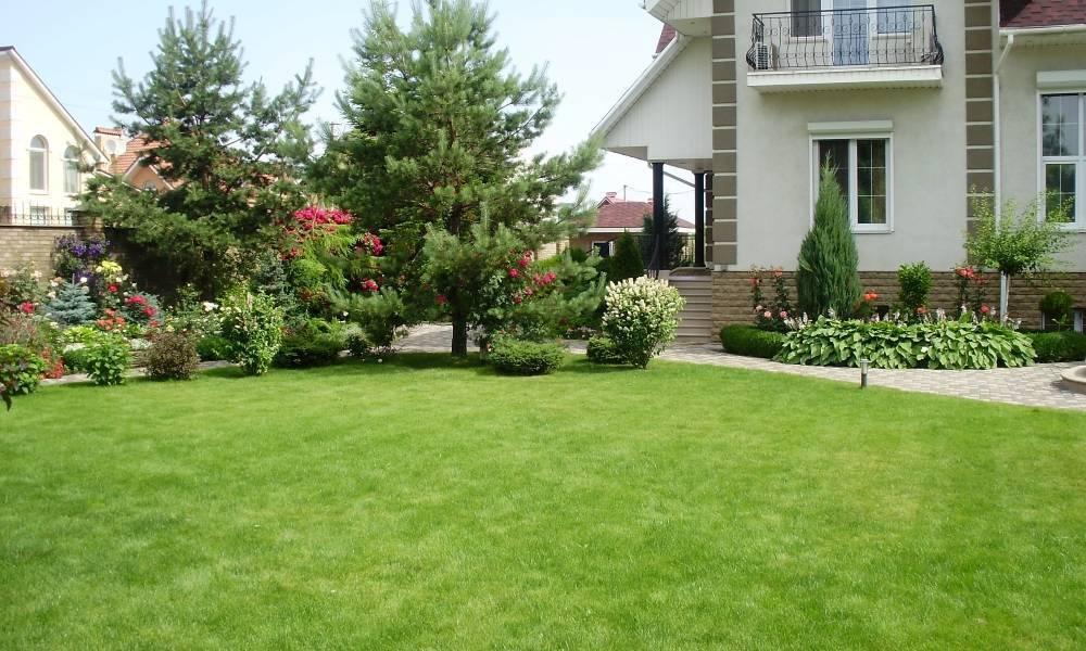 Какой газон лучше посадить на даче отзывы садовов о лучшей траве