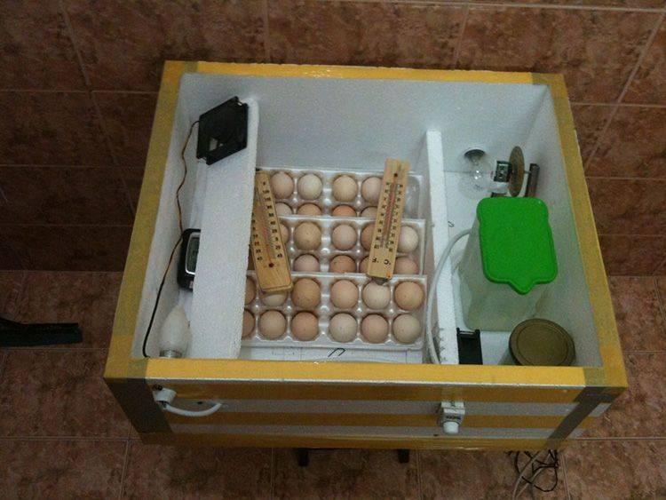 Инкубатор своими руками в домашних условиях: нюансы самостоятельного изготовления