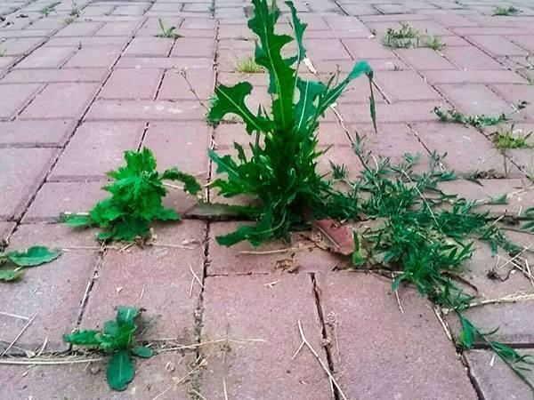 Чем вытравить траву на участке: как удалить с участка навсегда, народными средствами