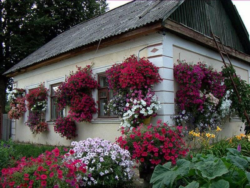 Красивые клумбы из петунии: обзор 5-ти лучших способов разбить цветник
