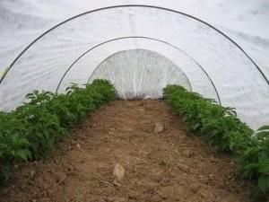 Доступный эко парник «подснежник» от башагропласт для дачи из агроволокна
