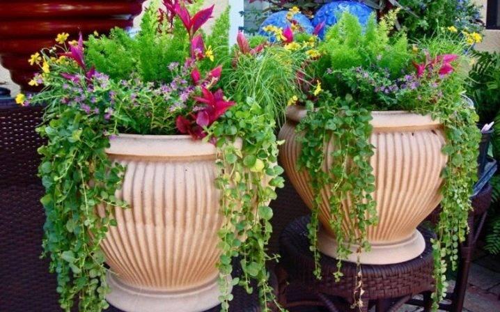 Уличные вазоны для цветов (48 фото): все о материалах и изготовлении - happymodern.ru