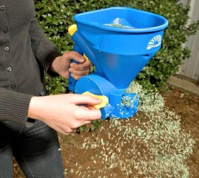 Газонная трава: какую выбрать, как и когда садить и как ухаживать за газоном