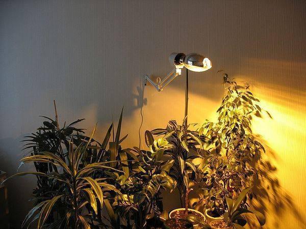 Подсветка для картин и зеркал: создаем иллюзию (22 фото)