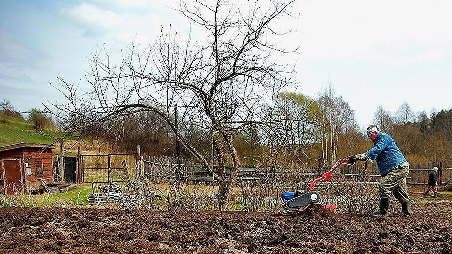 Осенние работы на приусадебном участке: поддерживаем красоту ландшафта и заботимся о будущем урожае