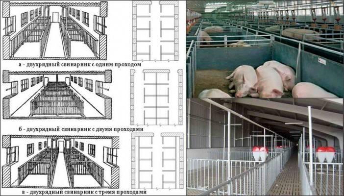 Свинарник своими руками: сооружение и схема строительства своими руками (80 фото)