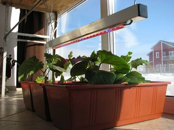 Город на подоконнике - ухаживаем за растениями на окне | cельхозпортал