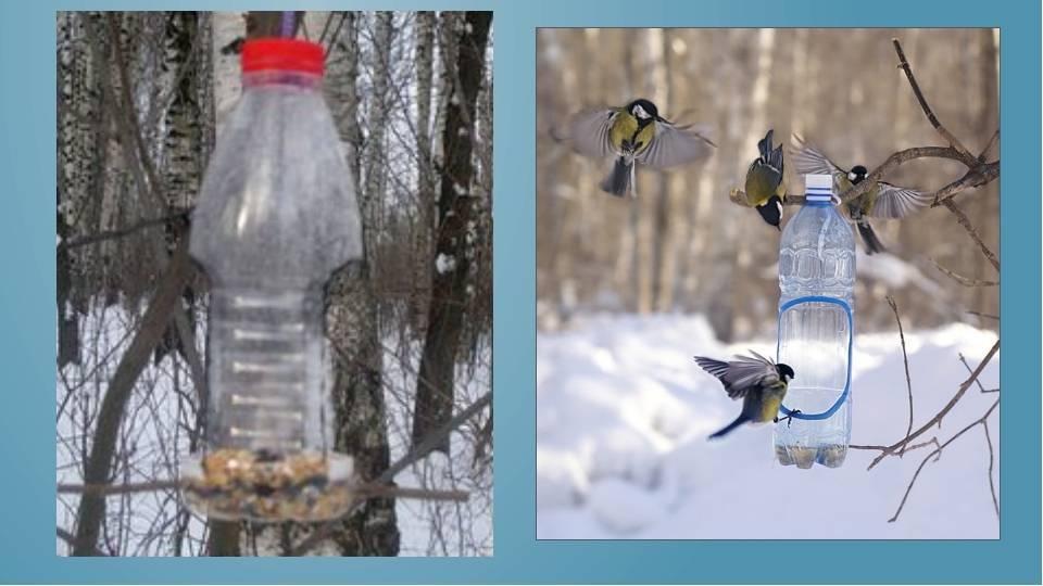 Кормушка для птиц из пластиковой бутылки своими руками: оригинальные идеи и их фото
