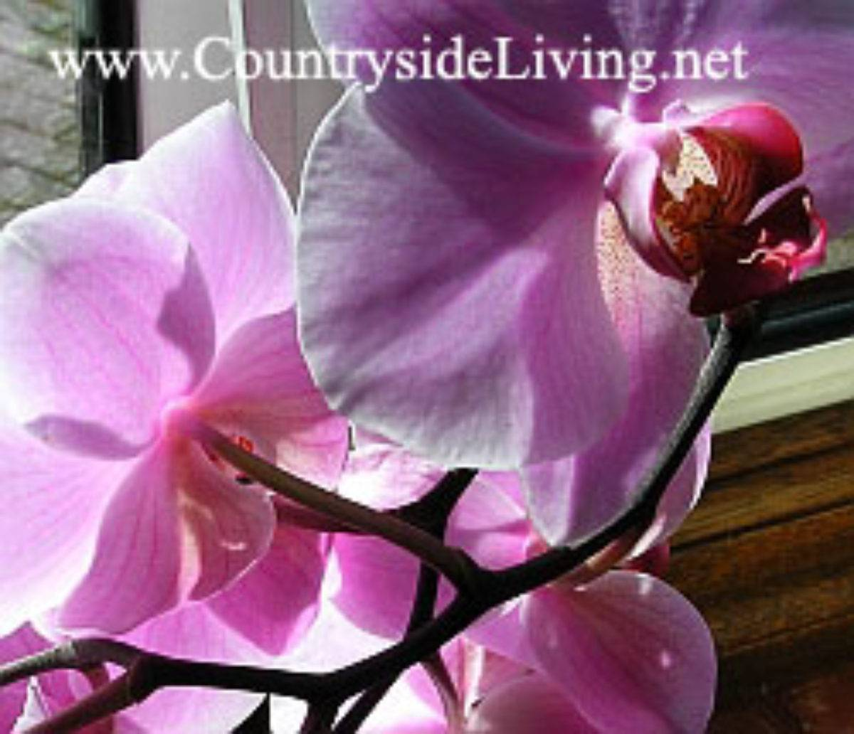 Как размножить орхидею в домашних условиях: цветоносом и другими вариантами