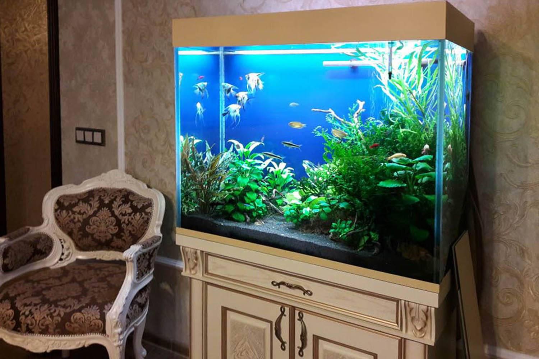 Дизайн аквариума на 100 л
