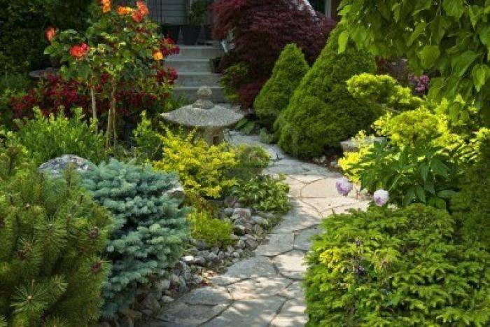 Лучшие цветы для дачи — неприхотливые многолетние растения и уход за ними (105 фото)