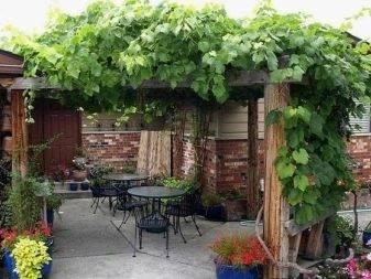 Шпалера для винограда – какой тип конструкции лучше использовать?