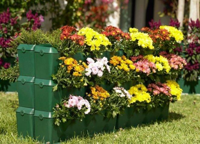 Низкорослые цветы для цветников, палисадников и клумб, цветущие все лето: фото и названия красивых и популярных сортов