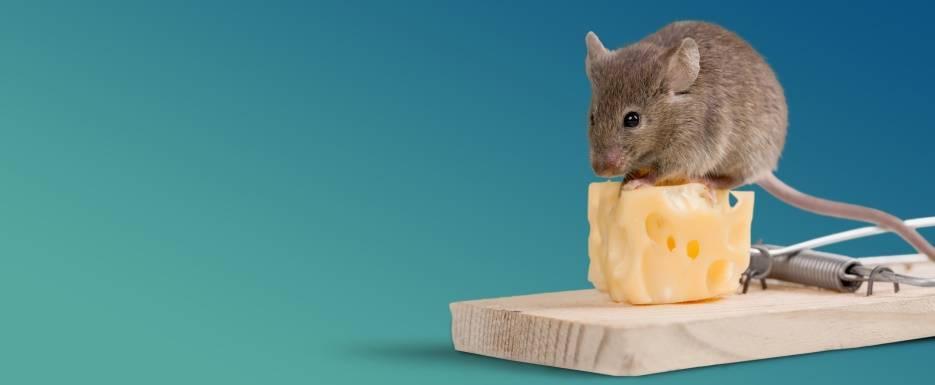 Грызут ли мыши пенопласт и минвату – разбираемся вместе
