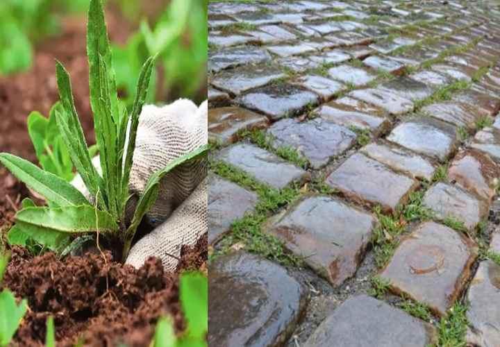 Как избавиться от травы на садовых дорожках надолго своими руками: Обзор