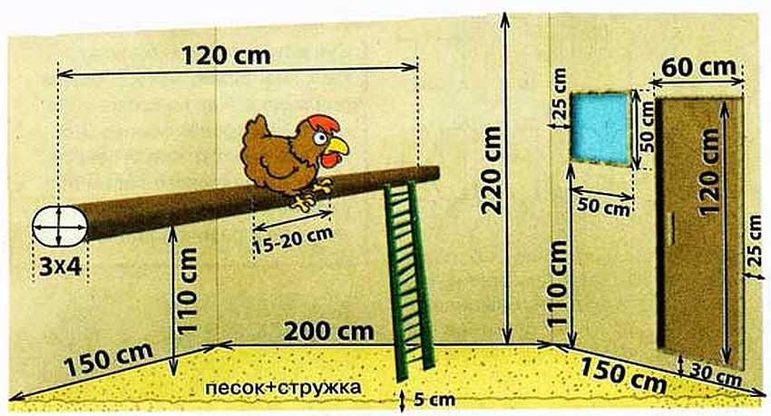 Как построить курятник на 10 кур своими руками