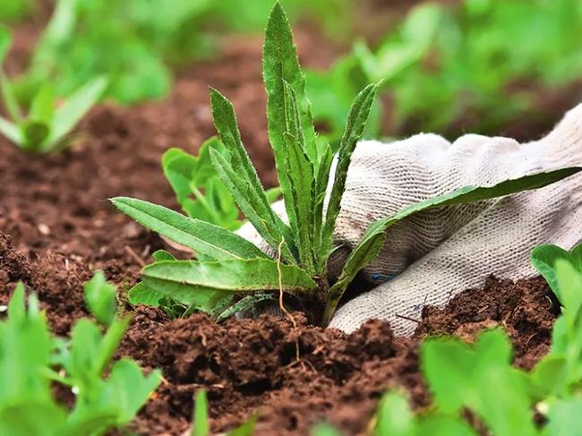 Как убрать траву между тротуарной плиткой с помощью промышленных или народных средств