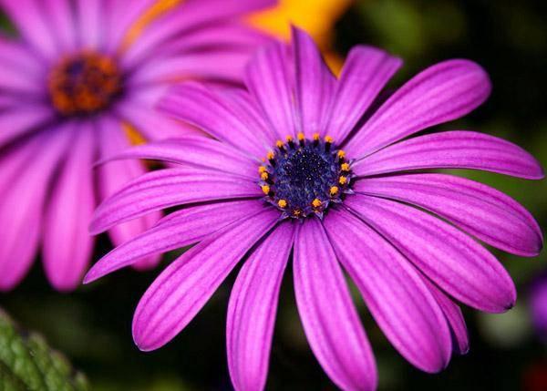 Сиреневый цвет в интерьере (97 фото): с какими другими цветами он сочетается? стены в лавандовых тонах, сиреневая плитка в комнате