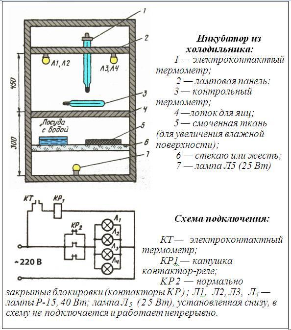 Самодельный инкубатор: как сделать в домашних условиях автоматику или из коробки
