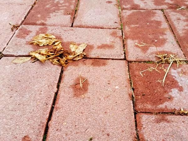 Как избавляются от травы между тротуарными плитками, эффективные методы и средства