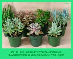 Вьющиеся комнатные растения (80 фото) - названия и виды,  выращивание, уход и полив