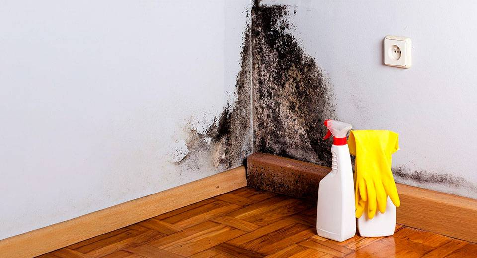 Конденсат на окнах внутри квартиры: почему образуется и как от него избавиться