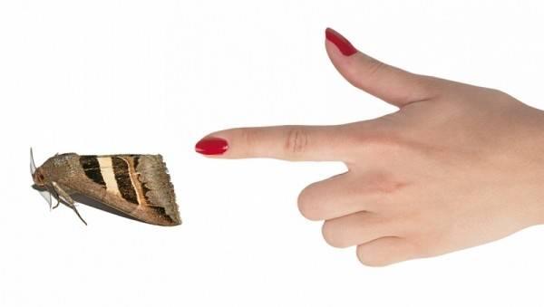 9 советов, как избавиться от моли в квартире