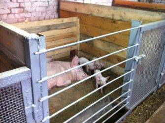 Свинарник на 20 голов своими руками. чертеж, схема, описание с фото и видео