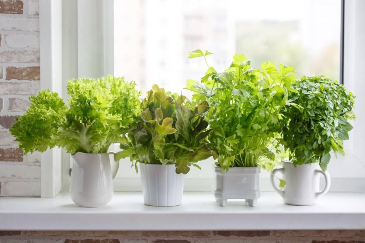 Огород своими руками — лучшие поделки для огорода и советы как разбить красивый огород на участке (115 фото)