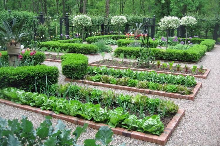 Декоративный огород — фото, применение в ландшафтном дизайне, идеи оформления