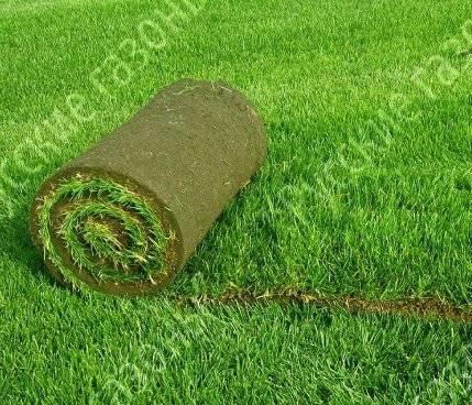 Какую траву выбрать для посадки газона: обзор видов трав и сортов смесей, примеры на фото