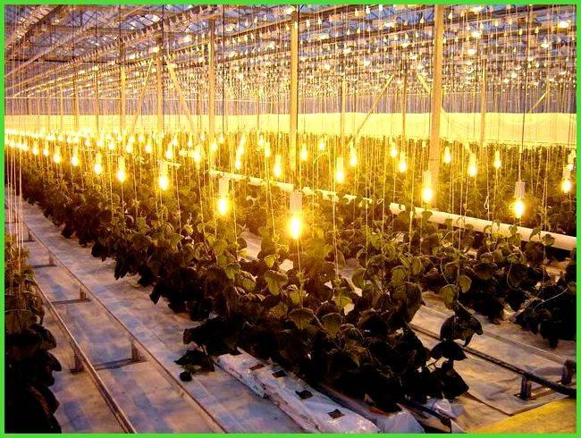Светодиодные светильники для теплиц: подробная инструкция по сборке