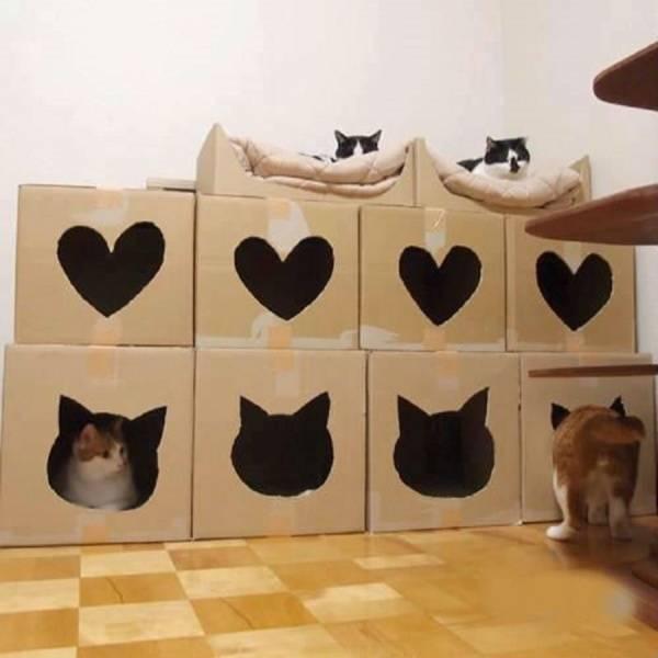 Как сделать домик из фанеры для кошки своими руками? 27 фото чертежи с размерами, эскизы дома для кота