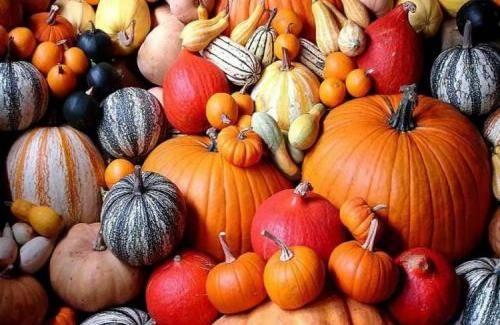 Что делать на даче осенью – завершение сезона и дела, сопутствующие этому