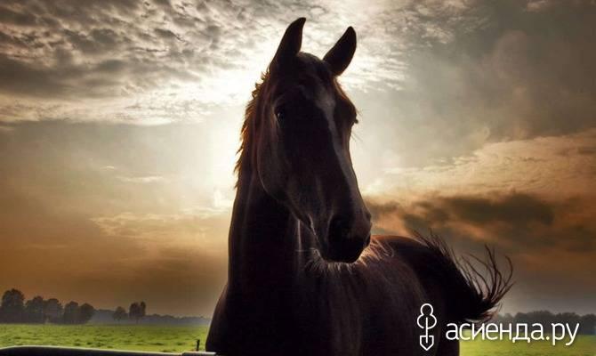 Конюшни для лошадей