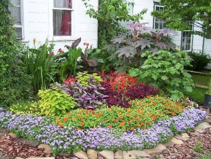 Низкорослые цветы для клумб цветущие все лето: названия с фото