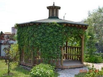 Выращивание винограда на беседке - советы и фото | housedb.ru