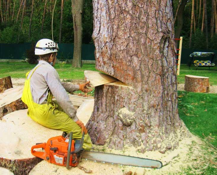 Пилим бензопилой правильно и ровно? Советы лесопилов деревьев - Обзор