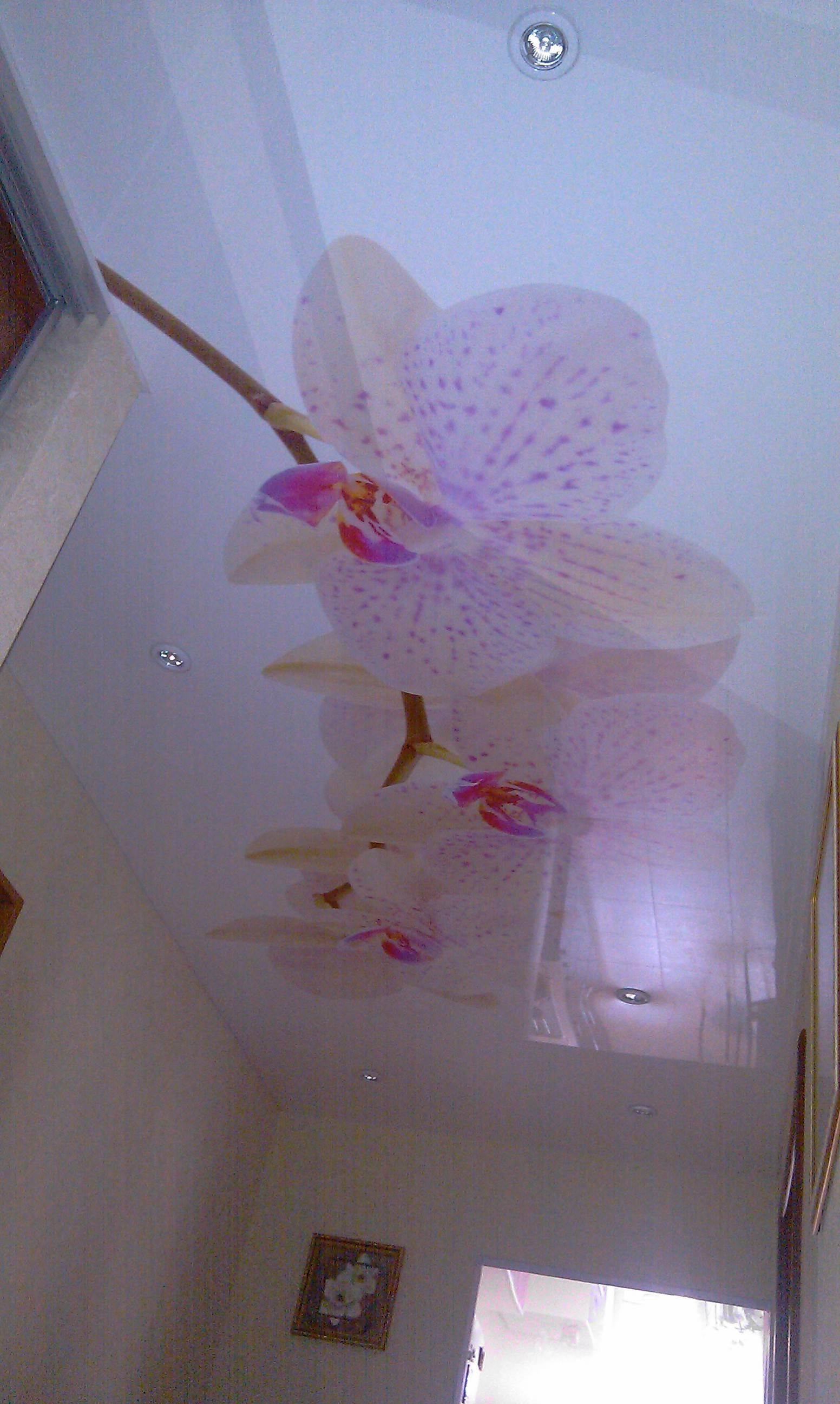 Натяжной потолок с орхидеей (20 фото): варианты дизайна